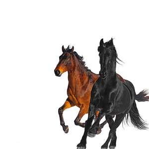 Lil Nas ft. Billy Ray Cyrus- Old Town Road